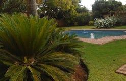 Plantas verdes cerca de la piscina foto de archivo