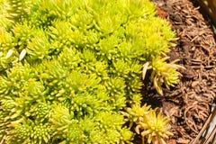 Plantas verdes crecidas en pote Imagen de archivo libre de regalías
