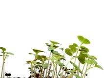 Plantas verdes crecientes Fotografía de archivo