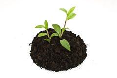 Plantas verdes crecientes en suelo Fotos de archivo