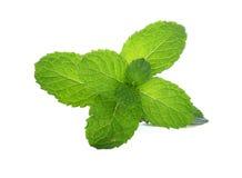 Plantas verdes da folha da hortelã isoladas no fundo branco Fotografia de Stock Royalty Free