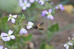 Plantas verdes da mostarda com suas flores Fotografia de Stock