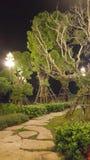 Plantas verdes das árvores do jardim Fotos de Stock Royalty Free