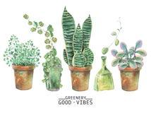 Plantas verdes de la acuarela en potes ilustración del vector