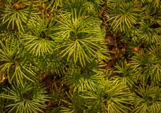 Plantas verdes de la caída Imagen de archivo libre de regalías