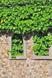 Plantas verdes de la guita en una casa de piedra Imágenes de archivo libres de regalías
