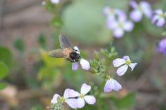Plantas verdes de la mostaza con sus flores Imagen de archivo libre de regalías