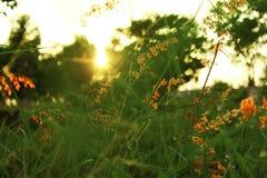 Plantas verdes de la puesta del sol de los prados Fotografía de archivo libre de regalías