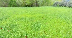 Plantas verdes del trigo en Anatolia Aerial Footage metrajes