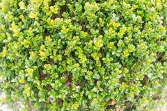 Plantas verdes dentro de uma estufa Fotografia de Stock Royalty Free
