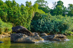 Plantas verdes e arbustos na praia, nas rochas e na pedra na água do mar Fotos de Stock