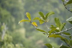 Plantas verdes e chuva pesada na floresta úmida fotos de stock