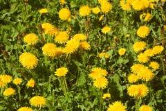 Plantas verdes e flores no jardim Fotografia de Stock Royalty Free