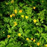 Plantas verdes e flores no jardim Fotografia de Stock