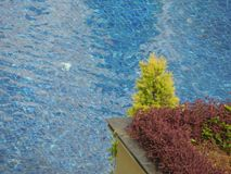 Plantas verdes e vermelhas na parte dianteira com fundo azul foto de stock