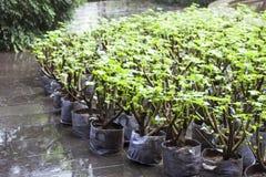Plantas verdes em pasta que esperam para ser plantado imagens de stock royalty free