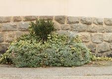 Plantas verdes en caso de que Imagen de archivo