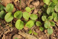 Plantas verdes en el fondo del suelo Imagen de archivo