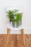 Plantas verdes en la silla blanca Foto de archivo