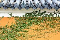 Plantas verdes en las paredes de edificios antiguos foto de archivo