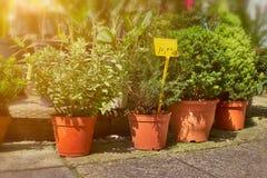 Plantas verdes en los potes colocados en el piso en la floristería de la calle foto de archivo