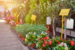 Plantas verdes en los potes colocados en la floristería de la calle foto de archivo