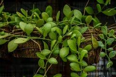 Plantas verdes en potes en la pared Foto de archivo libre de regalías