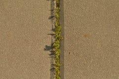 Plantas verdes en textura del fondo del asfalto Imagen de archivo libre de regalías