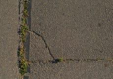 Plantas verdes en textura del fondo del asfalto Imagenes de archivo