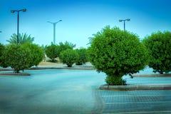 Plantas verdes en un estacionamiento Imagen de archivo