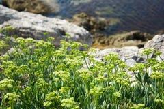 Plantas verdes en una orilla rocosa Imagenes de archivo