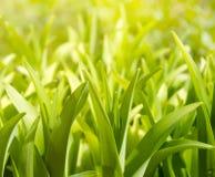 Plantas verdes enormes Imagen de archivo