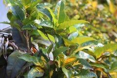 Plantas verdes expuestas a la luz del sol foto de archivo libre de regalías