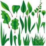 Plantas verdes fijadas Fotos de archivo