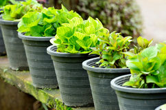 Plantas verdes frescas en potes Fotos de archivo