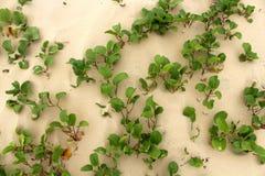 Plantas verdes hermosas en un arena de mar Imagen de archivo libre de regalías