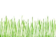 Plantas verdes jovenes Fotos de archivo