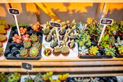 Plantas verdes na mostra do mercado francês fotos de stock royalty free