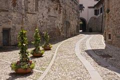 Plantas verdes na rua de pedra Foto de Stock