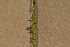 Plantas verdes na textura do fundo do asfalto imagem de stock royalty free