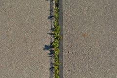Plantas verdes na textura do fundo do asfalto imagens de stock royalty free