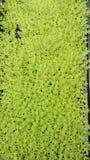 Plantas verdes, natureza, jardim, decoração Fotografia de Stock