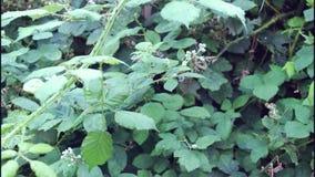 Plantas verdes no jardim pequeno filme