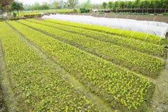 Plantas verdes novas fotos de stock royalty free