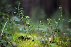 Plantas verdes para su diseño Fotografía de archivo libre de regalías