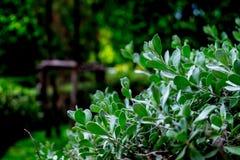 Plantas verdes pequenas foto de stock