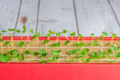 Plantas verdes que crecen en páginas del libro imagen de archivo libre de regalías