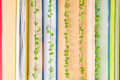 Plantas verdes que crecen en páginas del libro Imágenes de archivo libres de regalías