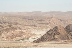 Plantas verdes que crescem no leito fluvial de Negev Imagens de Stock Royalty Free