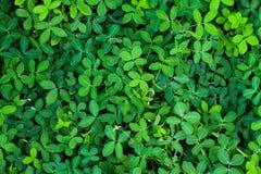 Plantas verdes que crescem o fundo Imagens de Stock Royalty Free